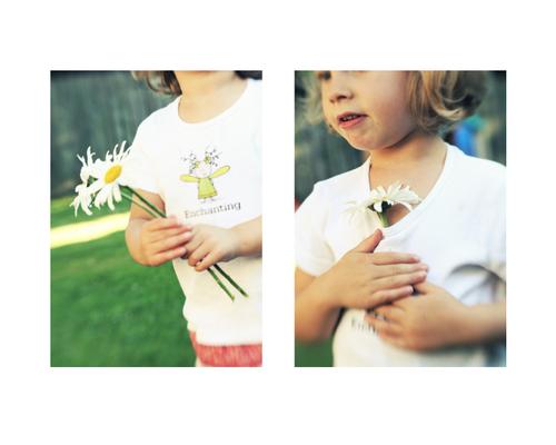 Enchanting_daisy_storyboard
